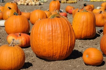 Pumpkins Stock Photo - 22635542