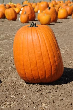 Pumpkin Stock Photo - 22635546