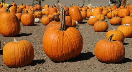 Pumpkins Stock Photo - 22635556