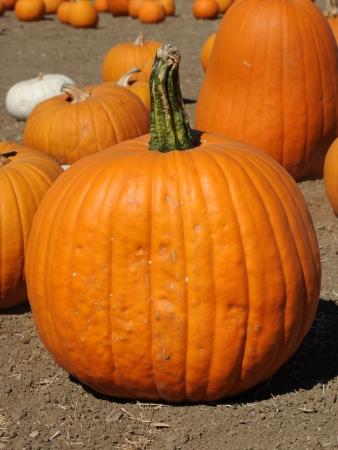 Giant Pumpkin Stock Photo - 22635599
