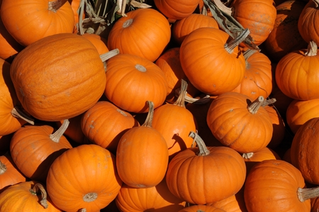 Pumpkins Stock Photo - 22635630
