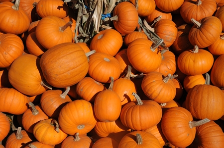 Baby pumpkins Stock Photo - 22635632