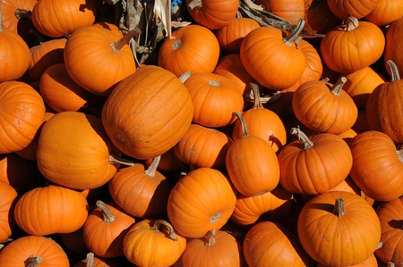 Mini Pumpkins Stock Photo - 23098915