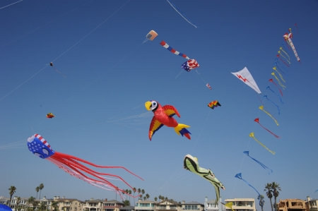 Giant Kites photo