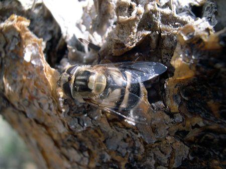 bee on cactus Stock Photo