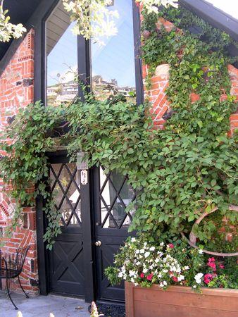ツタの下のドア 写真素材