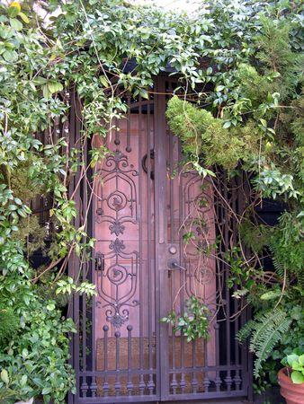隠されたキヅタ ドア 写真素材