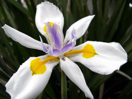 accented flower