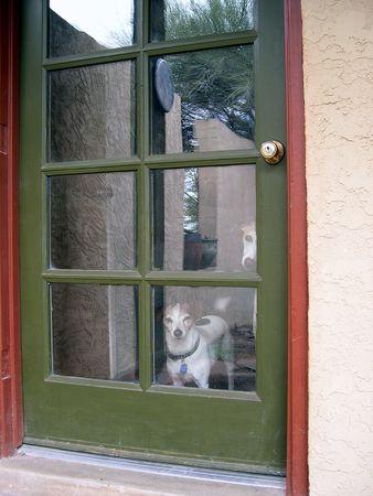 マスターを待っている犬 写真素材