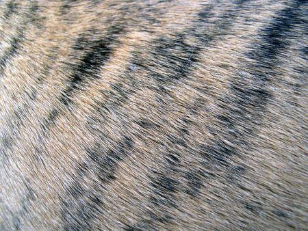 タイガー ストライプの髪