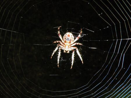 a spider in his web