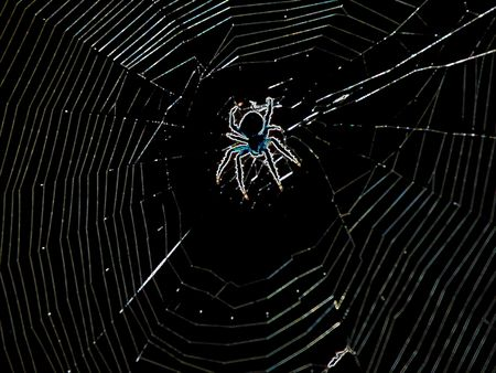 solarized spider in his web