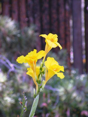 黄色の花 写真素材
