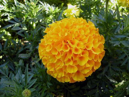 大きな黄色い花