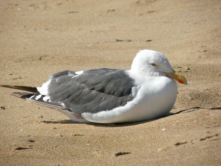 A seagull sitting in sand at the beach 写真素材