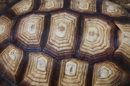 A close up shot of a turtle shell