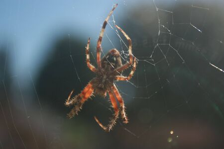 A very large garden spider outside of an office window