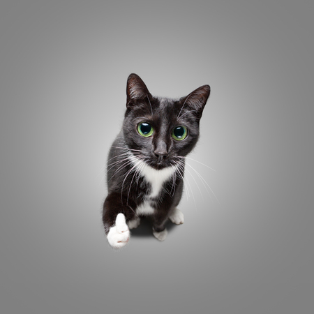 Cute cat giving thumbs up
