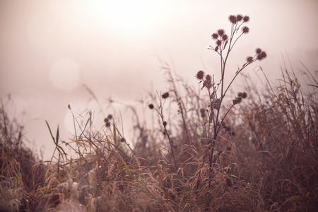Plants next to the shore of a foggy lake at sunrise - melancholic atmosphere Stok Fotoğraf