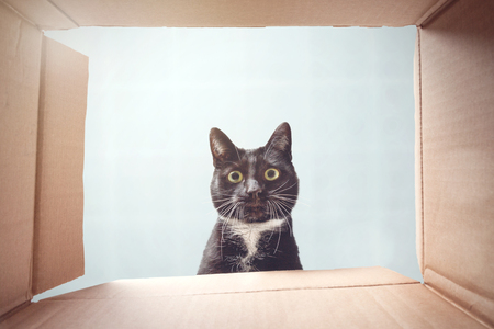 Kat kijkt nieuwsgierig in een kartonnen doos