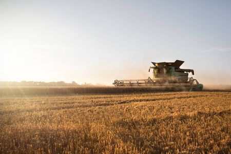 Harvested wheat field with a working combine harvester at sunset