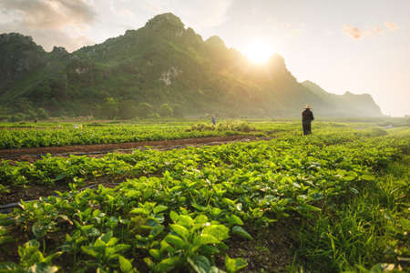 Agricultural field with farmers in Vietnam