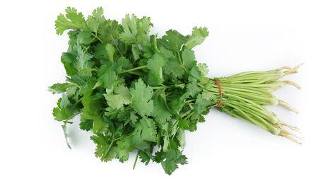 Fresh coriander vegetable isolated on white background Stockfoto