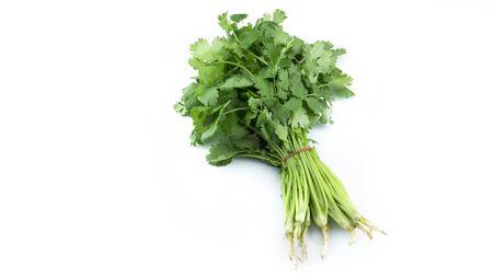 Fresh coriander vegetable