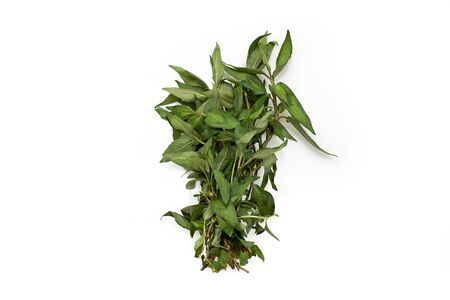 Vietnamese coriander isolated on white background