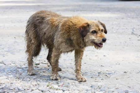 Abandoned dog begging for food. Stock Photo - 15581254