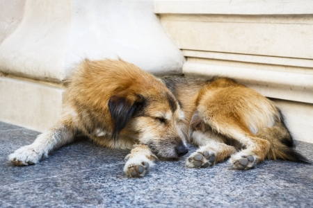 Stray dog sleeping on the steps of a building. photo