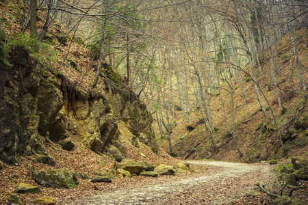 meandering: Meandering footpath in deciduous forest in the mountains near Brasov city, Romania.