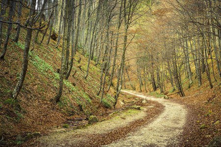 meandering: Meandering hiking track in deciduous forest in the spring, near Brasov city, Romania  Stock Photo
