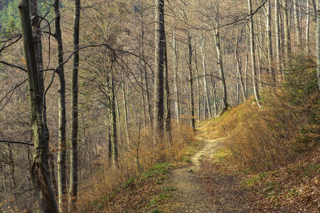 meandering: Meandering foot trail in dense deciduous forest in the spring, near Brasov city, Romania