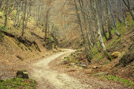 meandering: Meandering path in deciduous forest in the spring, near Brasov city, Romania