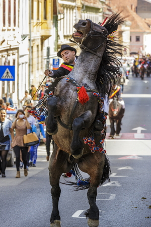 BRASOV, ROMANIA - APRIL 27: Brown spirited stallion rears with unidentified rider of Old Junii group during the old traditional parade of the Brasov Juni on April 27, 2014 in Brasov, Romania.