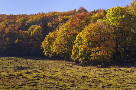 Autumn landscape with colorful forest edge and wide meadow. photo