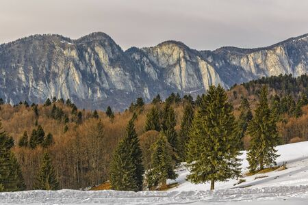escalate: Wintry landscape with Postavaru mountains range early in the morning, as seen from Poiana Secuilor chalet, Predeal, Romania. Stock Photo