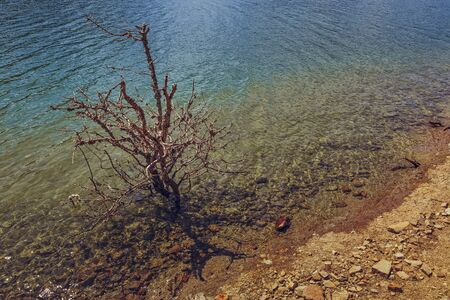 water resources: Dry leafless shrub in clear translucent lake water. Nature rebirth. Water resources.