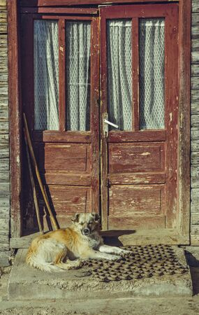 threshold: Sleepy mongrel dog resting on stairs, outside in the warm sunlight, near the door threshold of an old rustic wooden house.