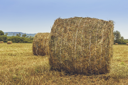 hayroll: Dry hay and straw bales in the field in Transylvania, Romania.