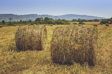 hayroll: Dry hay and straw bales on the field in Transylvania, Romania.