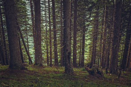 shady: Steep slope in a quiet shady spruce forest.