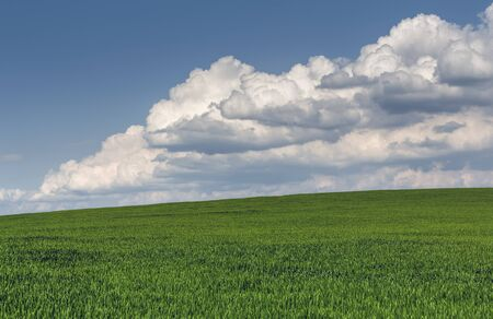 Spring scene with vast green wheatfield and heavy stormy cumulonimbus clouds. Stock Photo