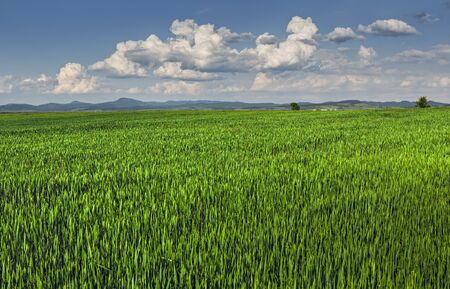 Springtime landscape with vast green wheatfield and stormy clouds. Stock Photo