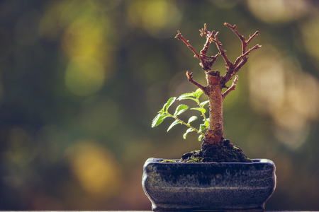 Dry bonsai tree trunk in a pot with fresh green sprigs over blurred natural background with copy space. Nature revival power. Resilience concept. Life triumph.