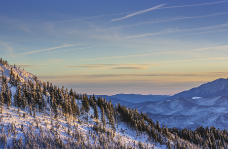 Alpine winter scenery with snowy coniferous forests on the slope of the Postavaru mountain at sunrise, Brasov county, Transylvania region, Romania.
