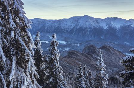 Winter alpine scenery with snowy fir trees and Bucegi mountains range on a serene cold morning as seen from Postavaru mountain, Poiana Brasov resort, Romania.