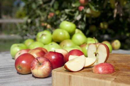 Apples freshly picked in orchard