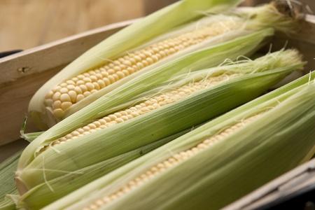 Corn on the cob in garden trug